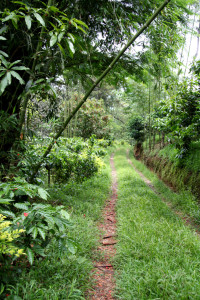 Plantation trails - great for shedding those extra calories!
